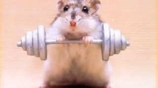 hamsters on wheel !!! Funny workout !! hamsterlar çemberde koşuyor !!!