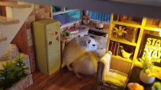 Funny Roborovski Hamsters Baby Playing In Miniature House DIY