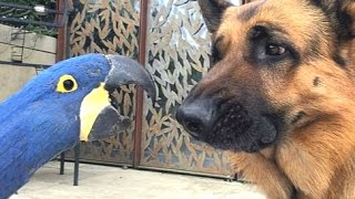 Best Of Funny Parrots Annoying Dogs Compilation || NEW HD