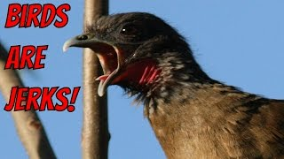Birds are Jerks Video Compilation