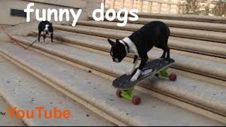 funny dogs, best pets agility, amazing dog talent, clever intelligent tricks