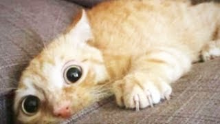 Cats Doing Stupid Things 😹 Funny Cats [Funny Pets]