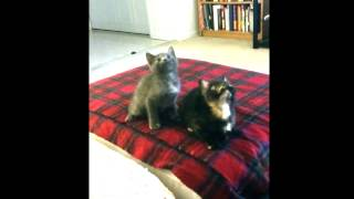 ENHANCED Kitten Jam – Turn Down For What Video (cute, funny cats/kittens dancing) (OFFICIAL)