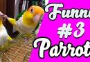 Funny Parrots and Cute Birds Compilation #3