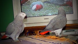 Cute Birds 🐦🐦 Funniest Parrots Ever (Part 1) [Funny Pets]