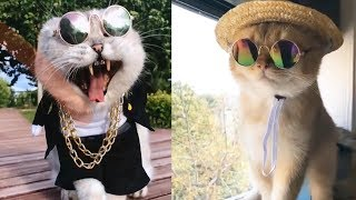 Cute Dogs and Cats | Funny Cats and Dogs Videos Compilation 2019 | Cute Is Not Enough
