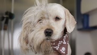 Homeless Dog Gets Makeover That Saves His Life! – Charlie