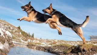 Funny German Shepherd Dog Compilation #4 – Cute Dogs Video