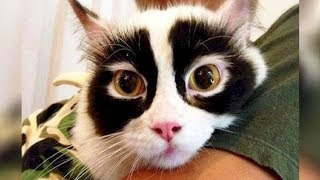 10 Cute Cats With Crazy Fur Patterns