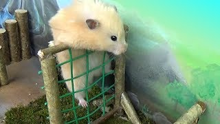 Hamster takes on the Military Obstacle Course!