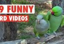 19 Funny Bird Videos || Awesome Compilation
