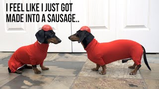 Ep 7. Wiener Dog BOBSLED – Funny Dogs in a Bobsled!