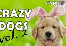 Crazy dogs – Funny dogs compilation vol. 2