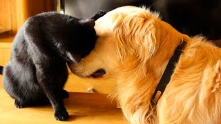 Funny Cats and Dogs Playing with Each Other #38