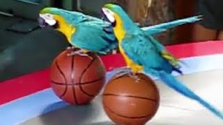 Cute Bird Tricks – Funny Parrot & Bird Videos – Funny Parrots Videos 2019