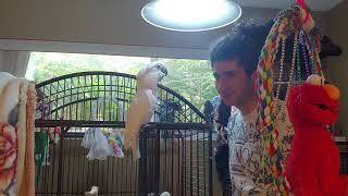 My funny smart cute Birds Joseph & Tiago :)