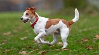 Cute Dogs Walking Funny Compilation 2014