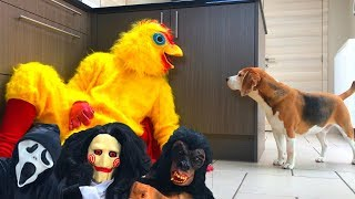 Funny Dogs Get Pranked Compilation : Cute Dogs Louie and Marie