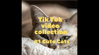 Tik Tok Video Collection #1 Cute Cats