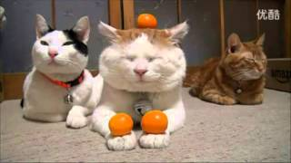 Cute Cats Balancing Fruits on Heads and Paws – Compilation