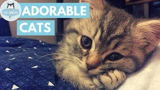 These Cute Cats Will Steal Your Heart