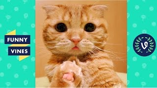 Cute cats Compilation 2016 – Best Cutest Cat Videos ever