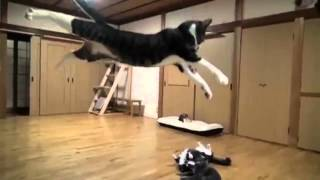 AWOLNATION 'Sail' and Funny Cats
