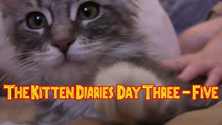 The Kitten Diaries – Day 3-5