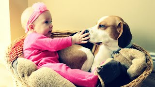 Dog and Baby Learning How to Love | Cute Beagle Dog Charlie