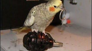 You will EXPLODE from laughing – ULTIMATE FUNNY BIRDS COMPILATION