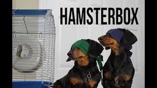 Ep 1. HAMSTER BOX – Funny/Scary Dog Video! (Dog Version of Bird Box!)