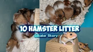 10 Hamster Litter Intake Story  | Munchie's Place