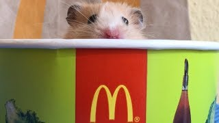 🍟 McDonalds Obstacle Course for Funny Hamster Jerry