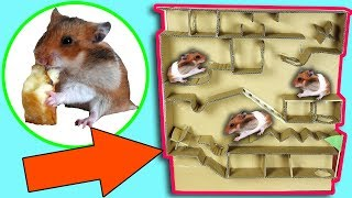 Hamster Escape From Pool Cardboard  – Hamster Running In Pool Maze Making From Cardboard