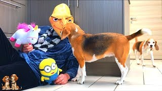 Minions GRU Vs Funny Dogs : Cute Minion Dogs Louie & Marie