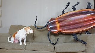 Dog vs Giant Cockroach Prank: Funny Dog Maymo