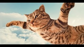 Funny Cat Vines – Short Funny Cats Videos – part 2