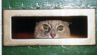 Cats Waits For The Mailman   Funny Cat Fights Mailman Compilation