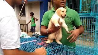 Galiff street pet market kolkata || exotic cute dogs ||exotic birds ||wholesale pet || fish || HD