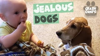 Jealous Dogs Want Attention Compilation | Cute Dogs 2018