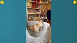 Cute Cats Videos Compilation Cute Moment Of The Cats – Cutest – Funniest Animals! #16