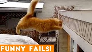 TRY NOT to LAUGH Animals FUNNY PET FAILS Compilation  2019 | Epic Pet Videos & Moments