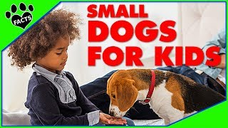 10 Best Small Dog Breeds for Kids Children Dogs 101