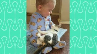 Babies Rocking a bye Cats –  Cute Babies and Pets Compilation
