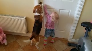 Cute Dog Helps Baby Open the Door   Charlie the Dog and Baby Laura