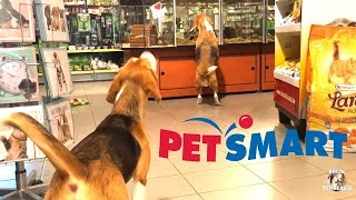 Funny Dogs at Petsmart WITHOUT A LEASH! Funny Beagles Louie & Marie