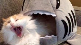 LAUGH SO HARD YOU'LL CRY – Funniest CAT VIDEOS compilation