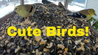Funniest Cute Birds | Small Adorable Birds for Cats to Watch