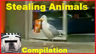 STEALING ANIMALS – Funny Dogs & Cats Compilation 2014 – Pt .1