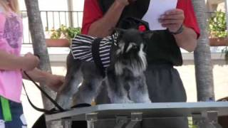 Cutest Dog Contest (in 2009)